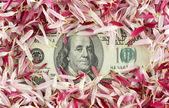 100 banknote under pink petals — Stock Photo