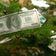 Royalty-Free Stock Photo: Banknotes on the Christmas tree