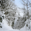 Snowy winter forest with path — Stock Photo #1447934