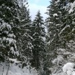 Snowy winter forest with path — Stock Photo #1447940