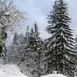 Snowy winter forest with path — Stock Photo #1447946