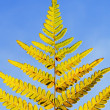 Autumn yellow fern against blue sky — Stock Photo