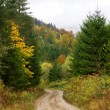 Stock Photo: Road through the autumnal forest