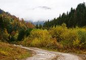 Camino a través del bosque otoñal — Foto de Stock