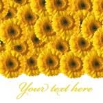 Beautiful yellow gerberas background — Stock Photo