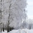 Stock Photo: Winter road in woods