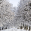 Winter road in the woods — Stock Photo