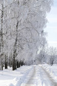 Winter road in the woods — Stockfoto