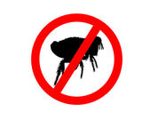 Prohibition sign for fleas on white back — Stock Photo