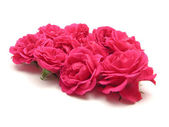 Bulk of pink roses on white background — Stock Photo