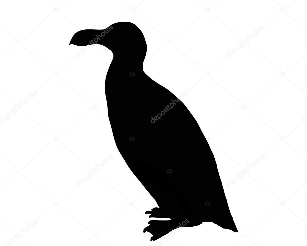 Razorbill as black silhouette on white background — Stock Photo #1283913
