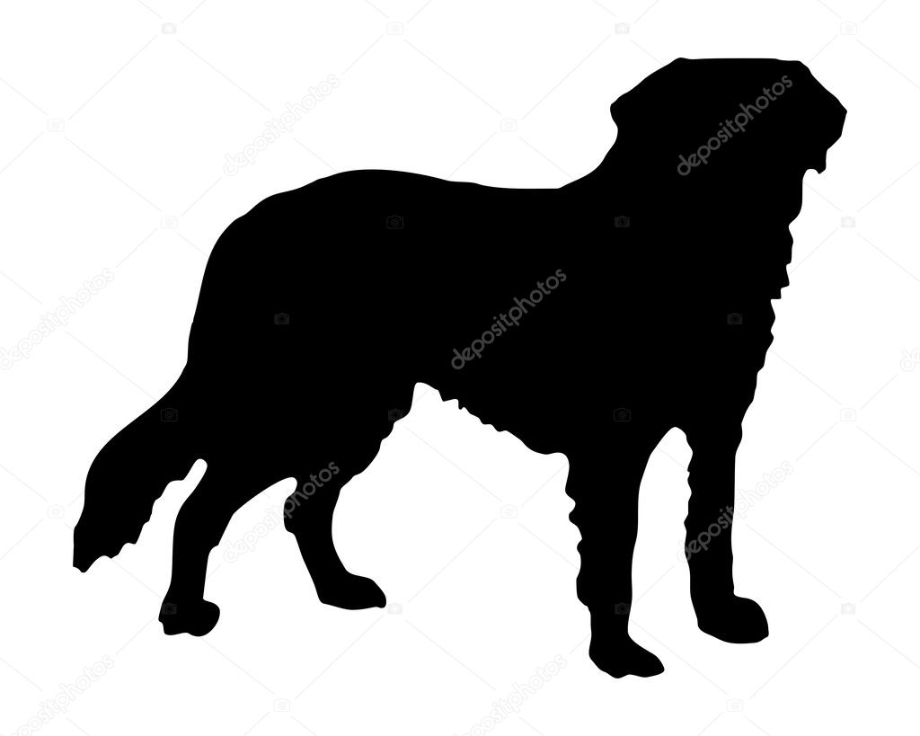 The black silhouette of a Saint Bernard | Stock Photo © Liane Nothaft ...