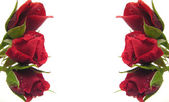 Red roses on the left and right side bu — Foto de Stock