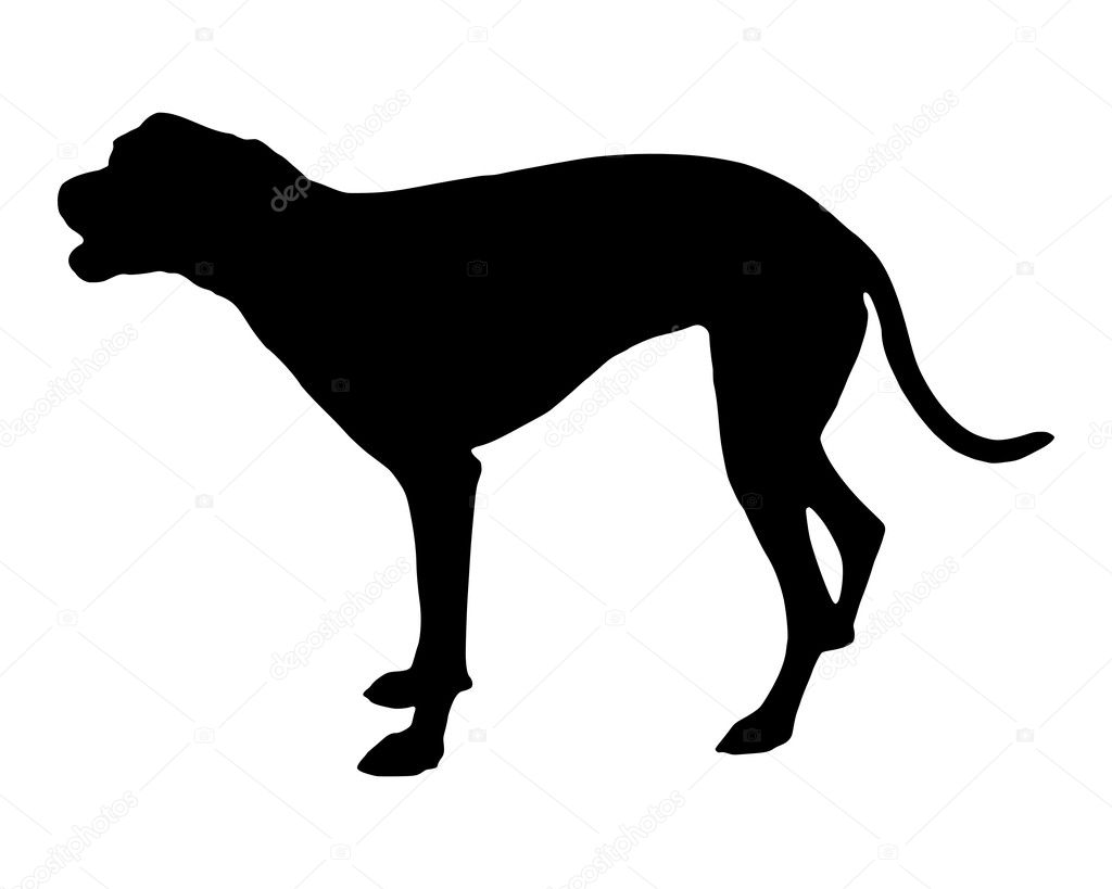 Barking dog — Stock Photo #1319712