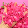 Pink rose buds and petals in open hand — Stock Photo