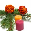 Fir with candles and marygold — Stock Photo