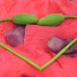 Heart out of poppy buds — Stock Photo