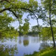 Stock Photo: Trees were inclined over water
