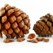 Nuts and Cone of Siberian Pine Isolated — Stock Photo