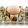 Foto Stock: Group of Raw Quail Eggs in Box Isolated