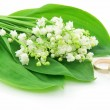 Lily of the Valley and Golden Rings Isol - Stock Photo