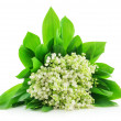 Lily of the Valley Isolated on White — Stock Photo