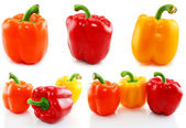 Collection of colored paprika isolated — Stock Photo