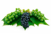 Bunches of Ripe Green and Blue Grapes wi — Stock Photo