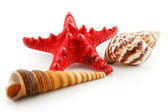 Colored Seashells (Starfish and Scallop) — Stock Photo