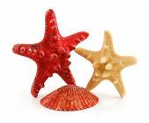 Colored Seashells Scallop and Starfishe — Stock Photo