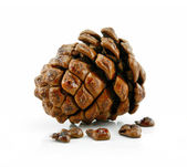 Cone and Nuts of Siberian Cedar Isolated — Stock Photo