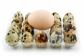 Group of Raw Quail Eggs in Box Isolated — Stock Photo