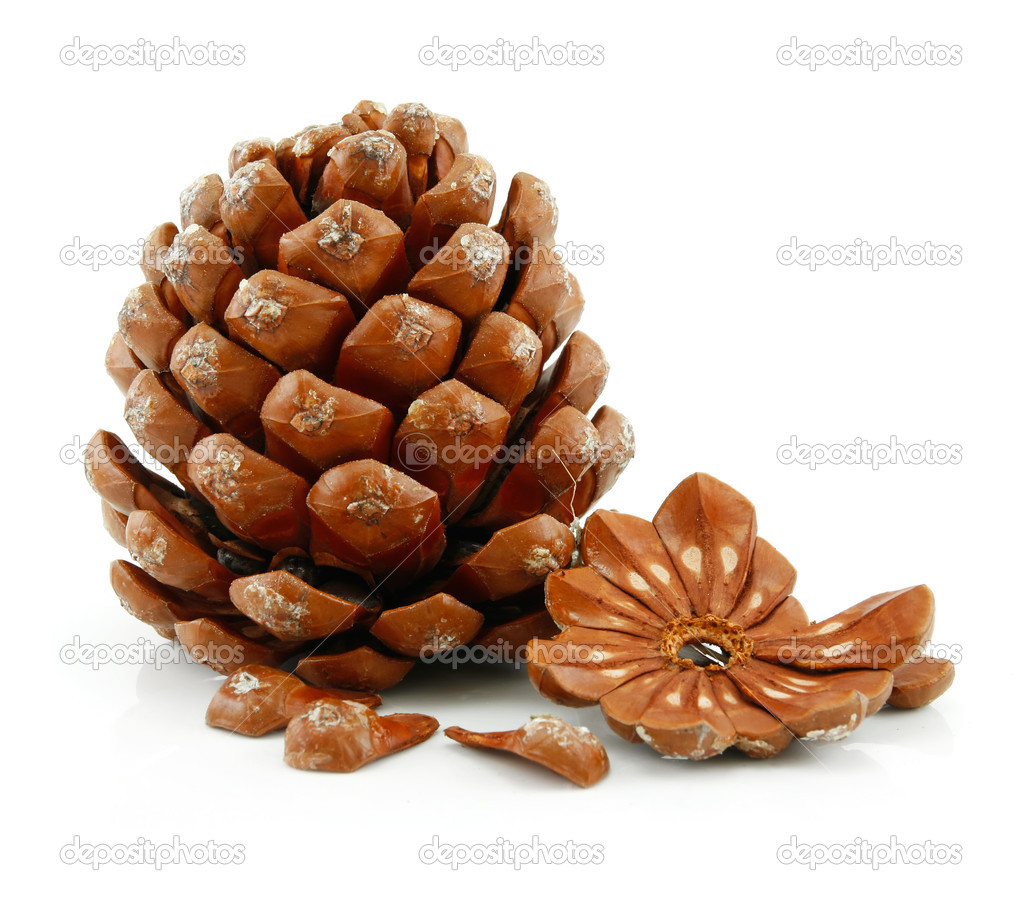 Nuts and Cone of Siberian Pine Isolated on White Background  Stock Photo #1297962
