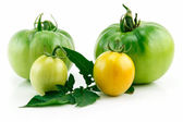 Bunch of Ripe Yellow Tomatoes with Green — Stock Photo