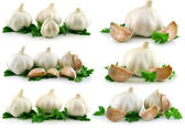 Collection of Garlic Vegetable with Gree — Stock Photo