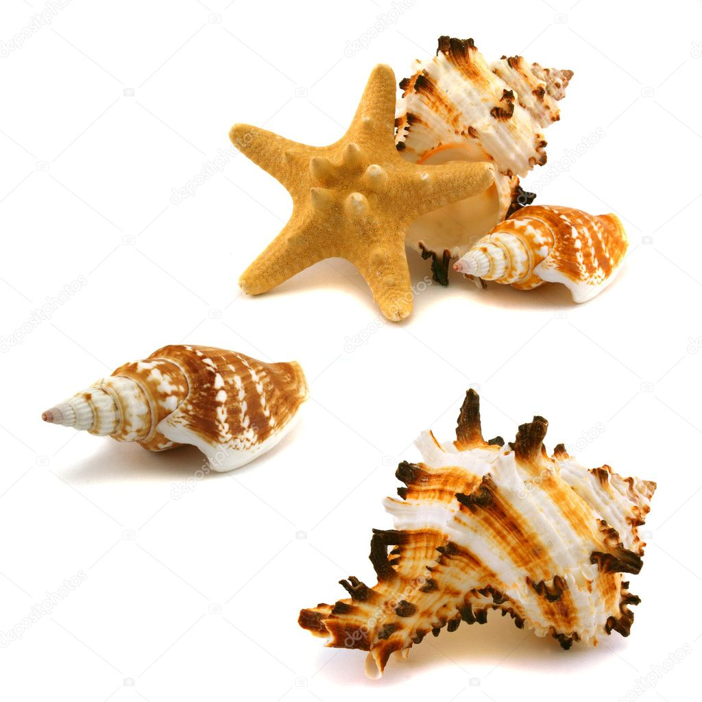 A few cockleshells and starfish on a white background — Stock Photo #1302051