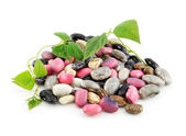 Heap of Ripe Haricot Beans with Seed and — Stock Photo