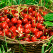 Bing Cherries in Basket — Stock Photo