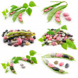 Collection of Ripe Haricot Beans — Stock Photo #1328241