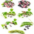 Collection of Ripe Haricot Beans with Seed Isola — Stock Photo #1328261