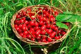 Bing Cherries in Basket — Stock Photo
