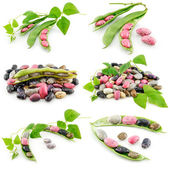 Collection of Ripe Haricot Beans — Stock Photo
