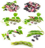 Collection of Ripe Haricot Beans with Seed Isola — Stock Photo