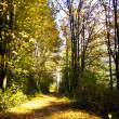 Forest lane in autumn. — Stock Photo