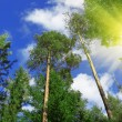 Forest and sun — Stock Photo