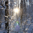 Sunset in winter wood — Stock Photo