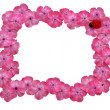 Frame of pink flowers - Stock Photo