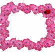 Frame of pink flowers — Stock Photo