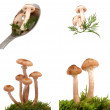 Stock Photo: Fresh wild mushrooms