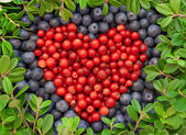 Cranberries and blueberries — Stock Photo